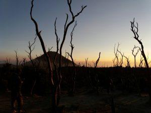 Sunrise Hutan Mati Papandayan