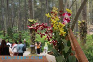 lenifey.com_Orchid Forest Cikole