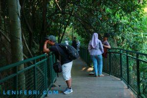 lenifey.com_Pengunjung Forest Walk Siliwangi Bandung