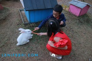 Ngasih makan kelinci di Rabbit Forest